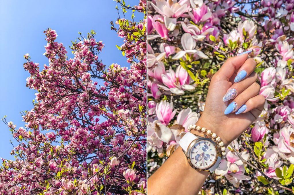 magnolie kraków