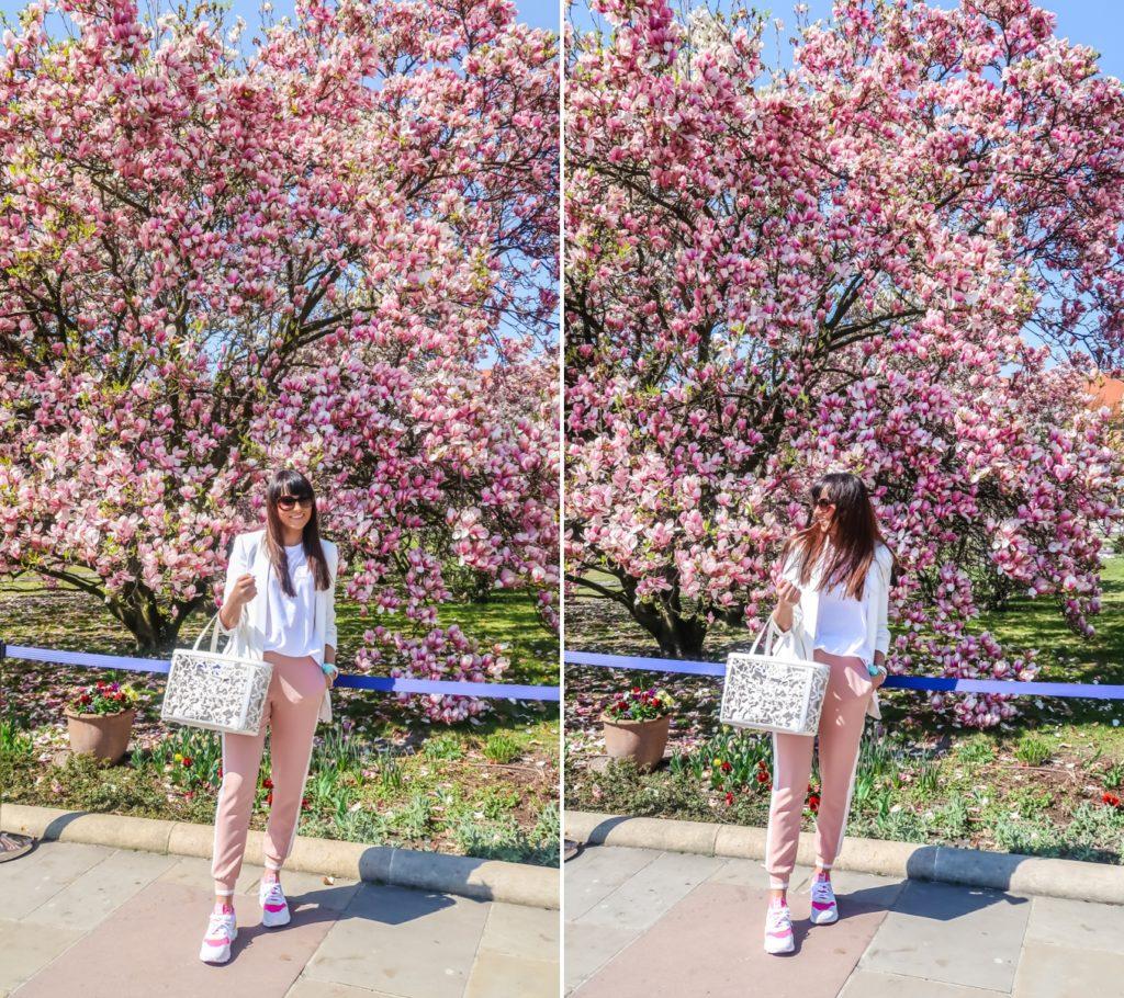 magnolie w krakowie