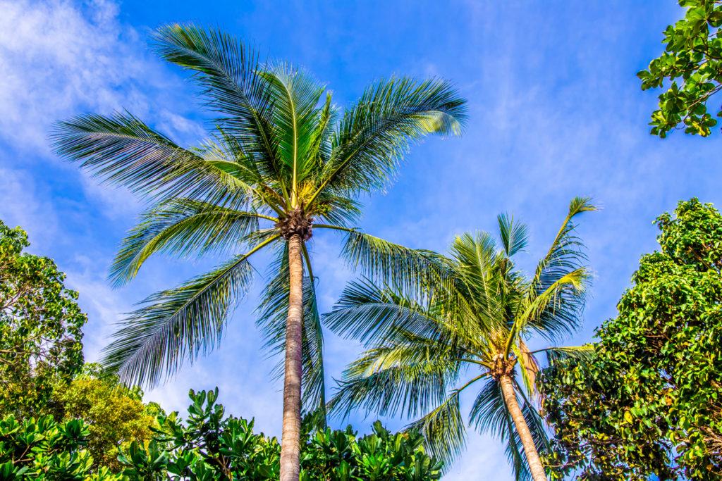 plaamkaa-koh-lanta-thailand-56-1024x683.