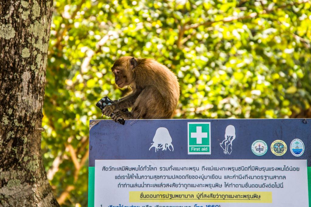 plaamkaa-koh-lanta-thailand-9-1024x683.j