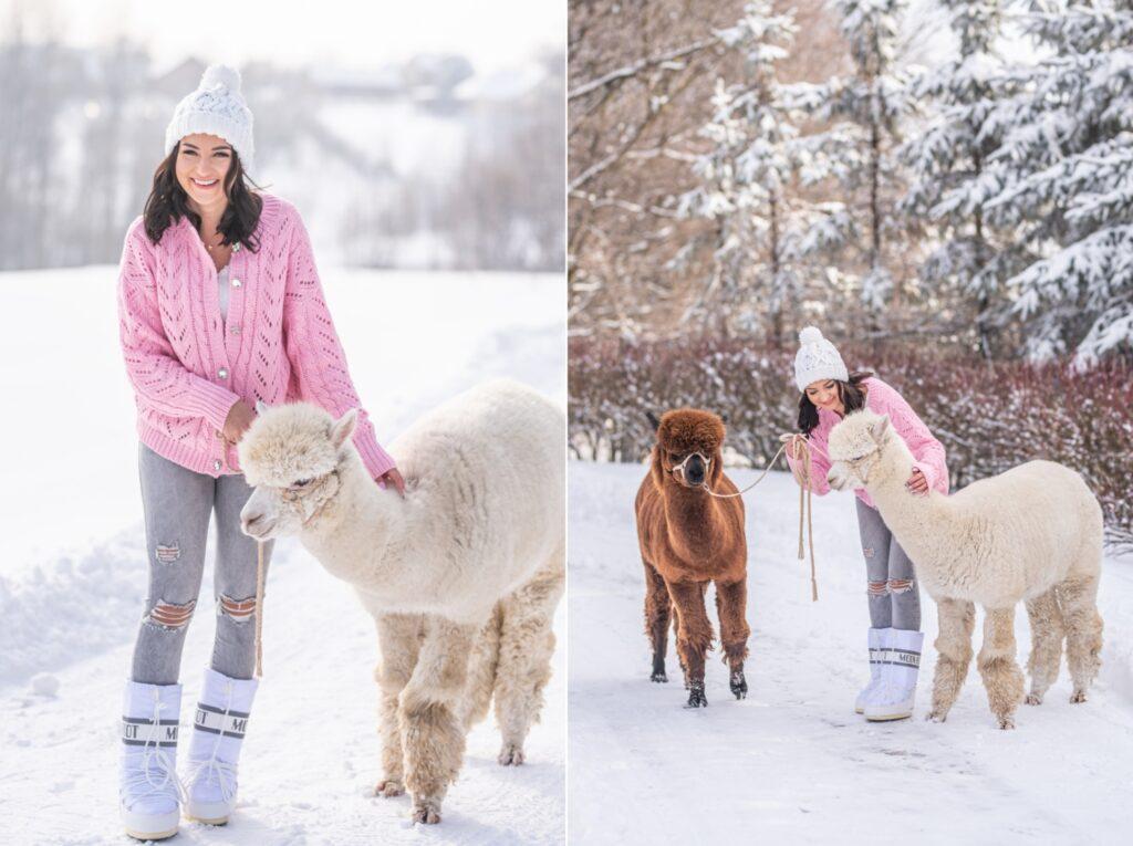 Alpacze Rzeszowskie